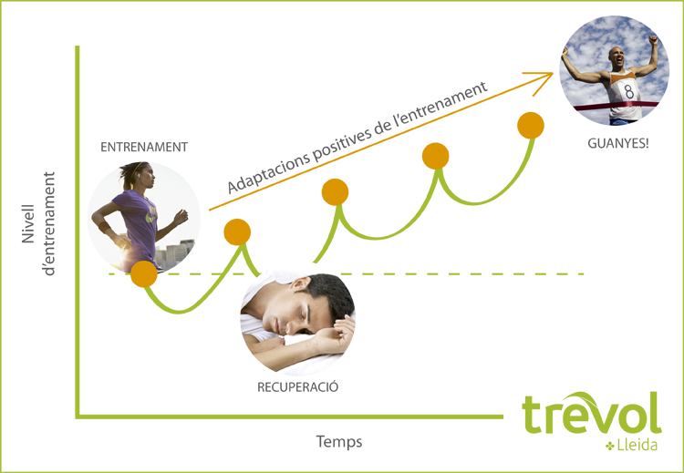 Adaptacions positives entrenament trevol